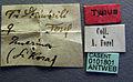 Tetramorium steinheili casent0101801 label 1.jpg