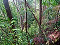 The Forest below the trail (15145495504).jpg