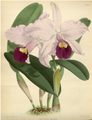 The Orchid Album-01-0137-0045.png
