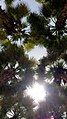 The Palm Trees at NYUAD.jpg