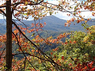 Great Smoky Mountains National Park - Colorful autumn leaves in October 2008