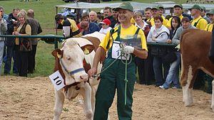 Pogórze Bukowskie - Image: The autumn cattle exhibition in Rudawka Rymanowska 2008. 08