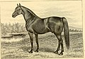 The breeds of live stock, and the principles of heredity (1887) (14780778152).jpg