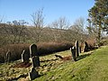 The graveyard of St. Mark's Church - geograph.org.uk - 704642.jpg