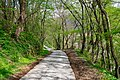 The long and winding road (33678759448).jpg