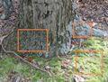 Three mosses and a tree.jpg