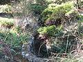 Tilden botanical garden 3.JPG