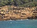 Tipaza archeologique site.jpg