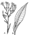 Tobacco (PSF).png