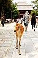Todai-ji, Nara (3810557145).jpg