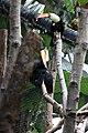 Toucan (29).jpg
