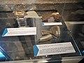 Trachio-andésite de Volvic, scorie basaltique de Gravenoire et prismes basaltiques de Gergovie.jpg