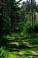 Trail Maintenance Path RCR-TR-2.jpg
