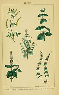 Traité pratique et raisonné des plantes médicinales indigènes (Pl. XXV) (6459821637).jpg
