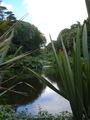 Trebah Gardens1.jpg