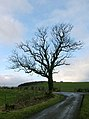 Tree At Junction Near Dundonald - geograph.org.uk - 325026.jpg