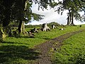 Tree stumps above Thirlwall Castle - geograph.org.uk - 991069.jpg