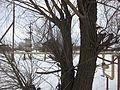 Trees - panoramio (26).jpg