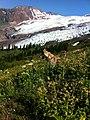Trip 11-0911 Mt Baker skiing - 28 (6499119137).jpg