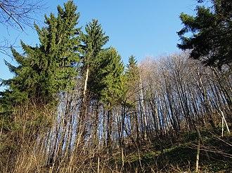 Jan Žižka partisan brigade - Woods around Trojačka