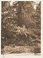 Tsawatenok Tree Burial LACMA AC1997.271.34.jpg