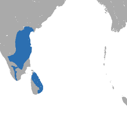 Tufted Gray Langur area.png