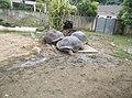 Turtles in Zoo Negara Malaysia (6).jpg