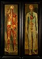 Two anatomical oil paintings by D'Agoty Wellcome V0017122.jpg