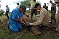 US Navy 070720-N-8704K-245 Lt. Cmdr. Gregg Langham, a U.S. Public Health Service veterinarian, works with Nicaraguan Ministry of Agriculture and Forestry (MAGFOR) veterinarian Marcio Reyes to assist a cow at the Dos Potrillos R.jpg