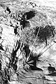 UTAH - Hite Crossing (7) (11117944595).jpg