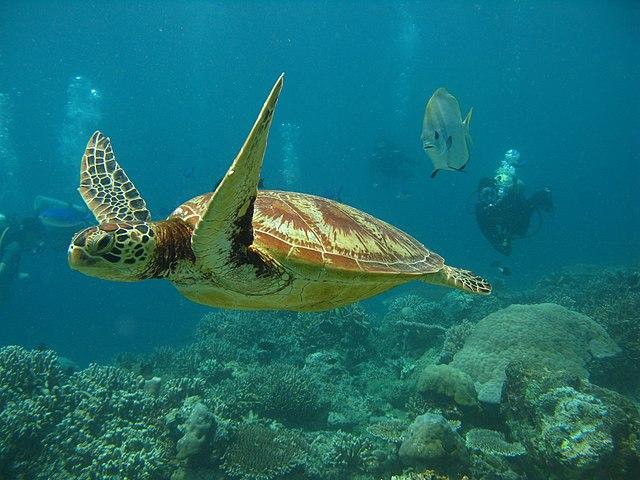 Turtle Beach Siesta Key Property Auction