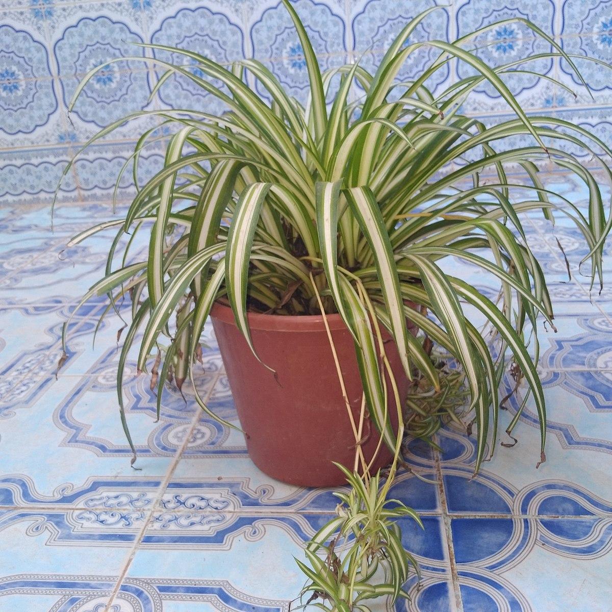 Fichier Une Petite Plante Verte Dans La Maison Jpg Wikipedia