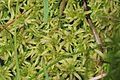 Unid. moss - Flickr - S. Rae (1).jpg