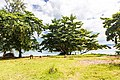 Unnamed Road, Tambon Ko Libong, Amphoe Kantang, Chang Wat Trang 92110, Thailand - panoramio (38).jpg