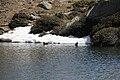 Vall del Madriu-Perafita-Claror - 96.jpg