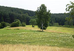 Vištytgirio miškas1.JPG