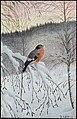 Vintermorgen Dompap (12924455554).jpg