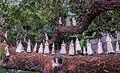 Virgenes del Valle en árbol.jpg