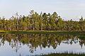 Viru Bog, Parque Nacional Lahemaa, Estonia, 2012-08-12, DD 68.JPG
