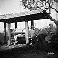 Vola podkujejo v štantu, Sv. Vrh 1951 (2).jpg