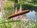 W ogrodzie botanicznym - panoramio.jpg