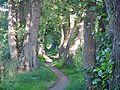 Wanderweg am Timmendorfer Mühlengraben - panoramio.jpg
