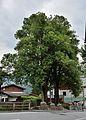 War memorial with trees Piesendorf.jpg