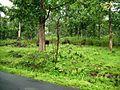 Wayanad Wildlife Sanctuary, Tholpetty Range - panoramio (4).jpg