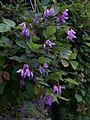 Whf purple 33.jpg