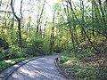 Wielkopolski Park Narodowy wiosną 9.jpg