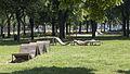 Wien 12 Haydnpark e.jpg