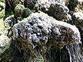 WikiProjekt Landstreicher Wasserfall Hinang 32.jpg