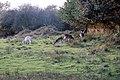 Wild Deer (1971319564).jpg