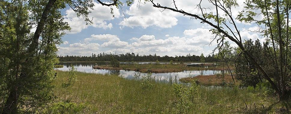 Wildsee-pjt2